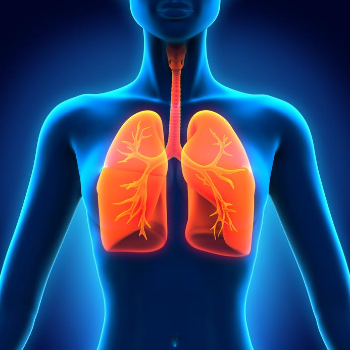 Female Anatomy of Human Respiratory System